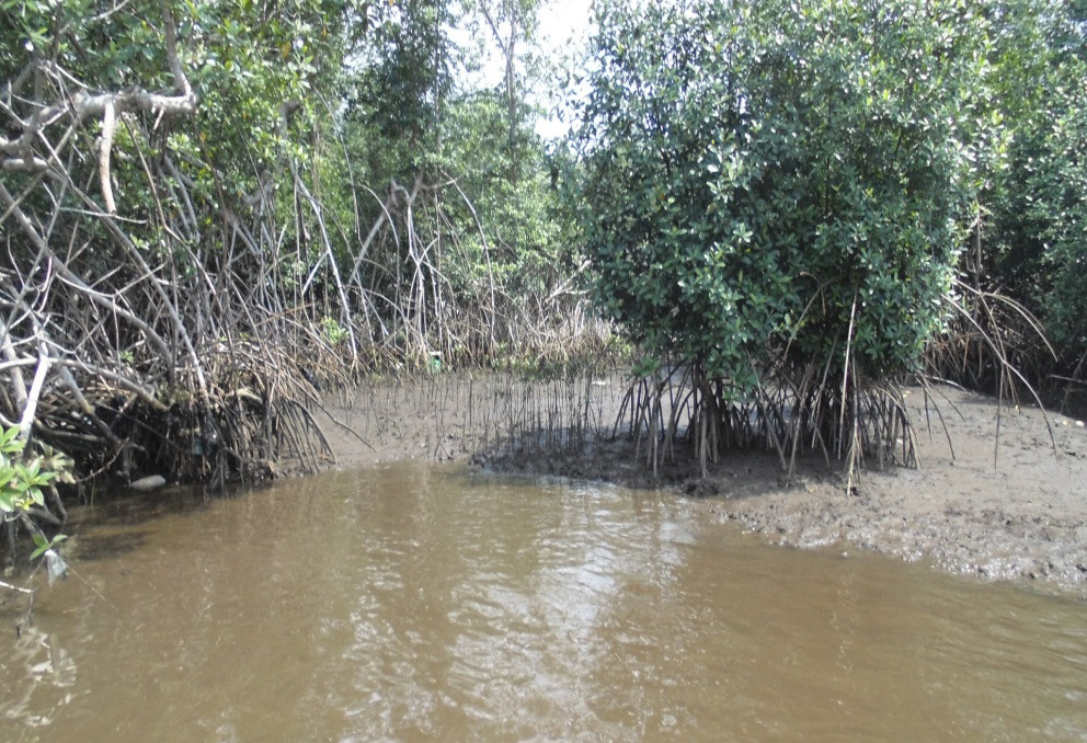Page 30 of Mangroves of the Niger Delta: Their Importance, Threats, and Possible Restoration