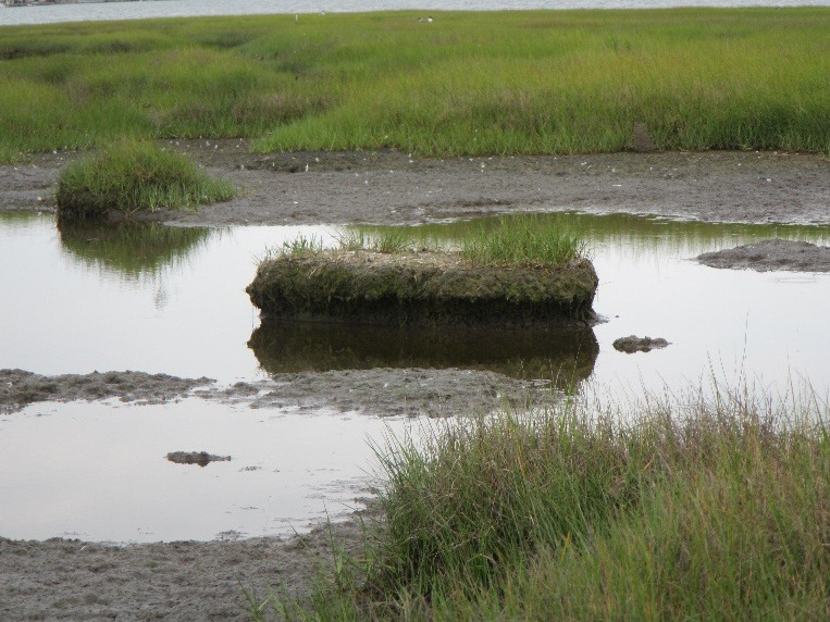 Page 14 of Marsh Restoration Using Thin Layer Sediment Addition: Initial Soil Evaluation