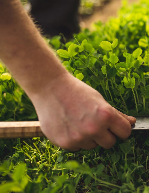 Read story: Small Wonders: microgreens pack a big punch