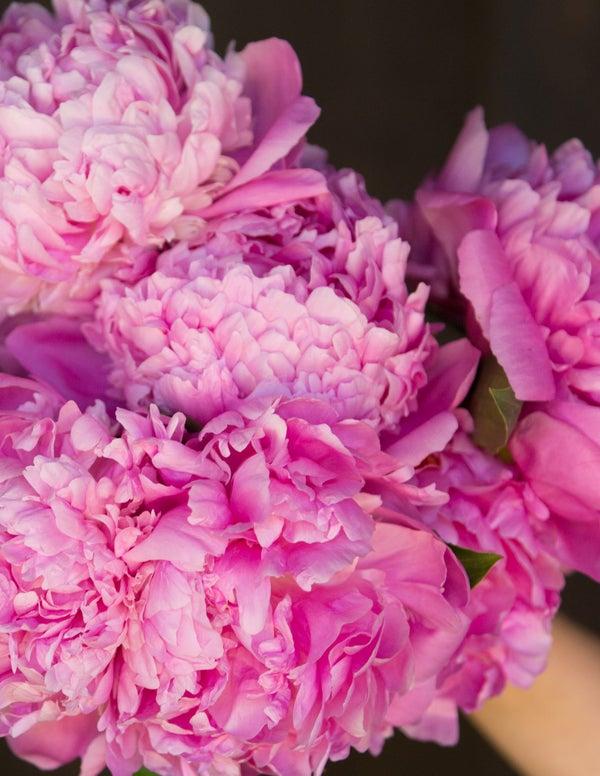 Garden Bush: Top 10 Fragrant Plants To Add To Your Garden
