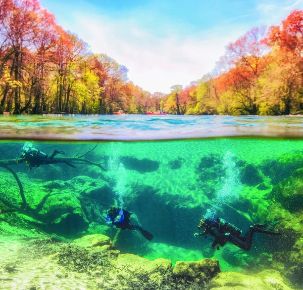 Read story: The Serenity of Life Underwater