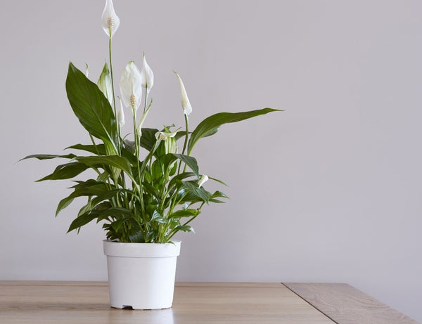 Read story: The Top Air Purifying Plants for Your Home