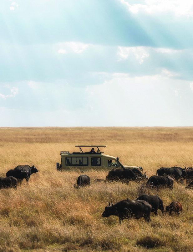 Read story: Tanzania Revealed