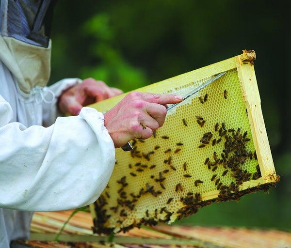 Read story: Alberta's Honey Industry Keeps On Buzzing