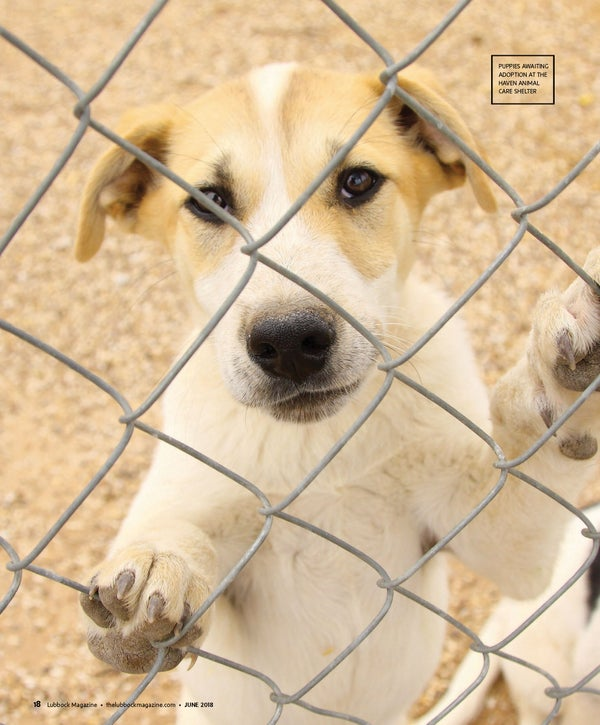 Page 20 of Forever Homes Wanted
