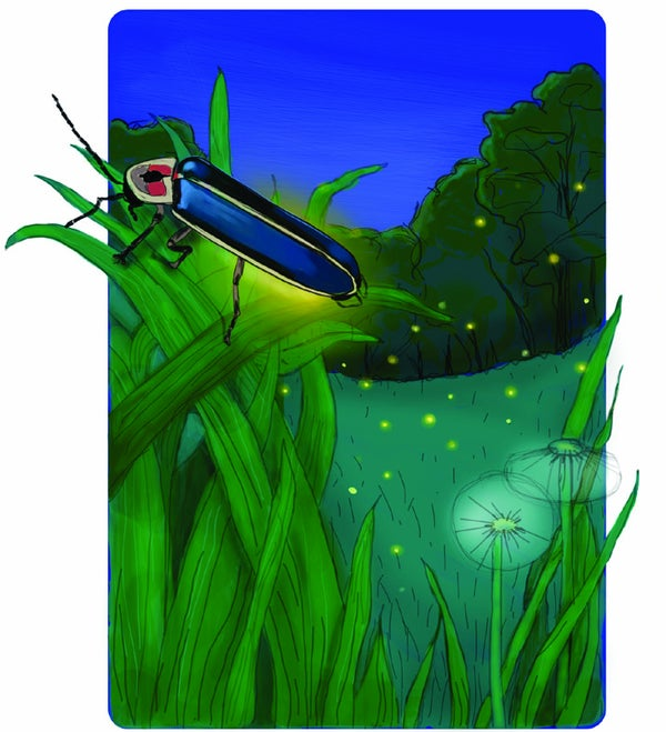 Page 5 of Five things everyone should know about ... Fireflies
