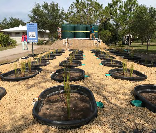 Page 32 of Experimental Wetlaculture (Wetlands + Agriculture) Mesocosm Compound Established in Naples, Florida, to Restore Wetlands, Solve Harmful Algal Blooms, and Develop Sustainable Agriculture