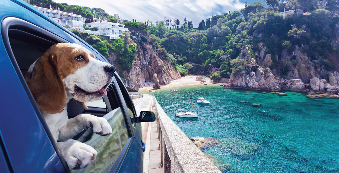 Page 216 of 5 Tips to Take Pets on Trips