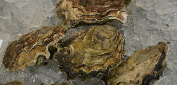 Page 19 of Oyster Types