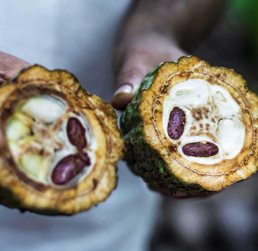 Page 30 of Cacao en Oaxaca: Mitos, molinillos y mapas
