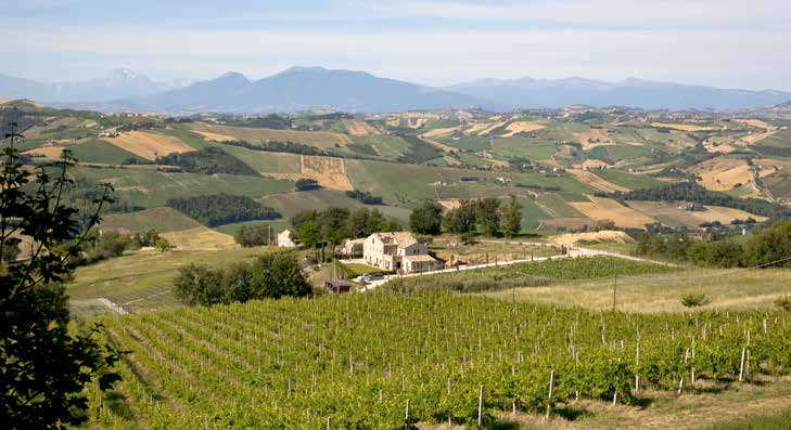 Page 78 of In Love With Le Marche