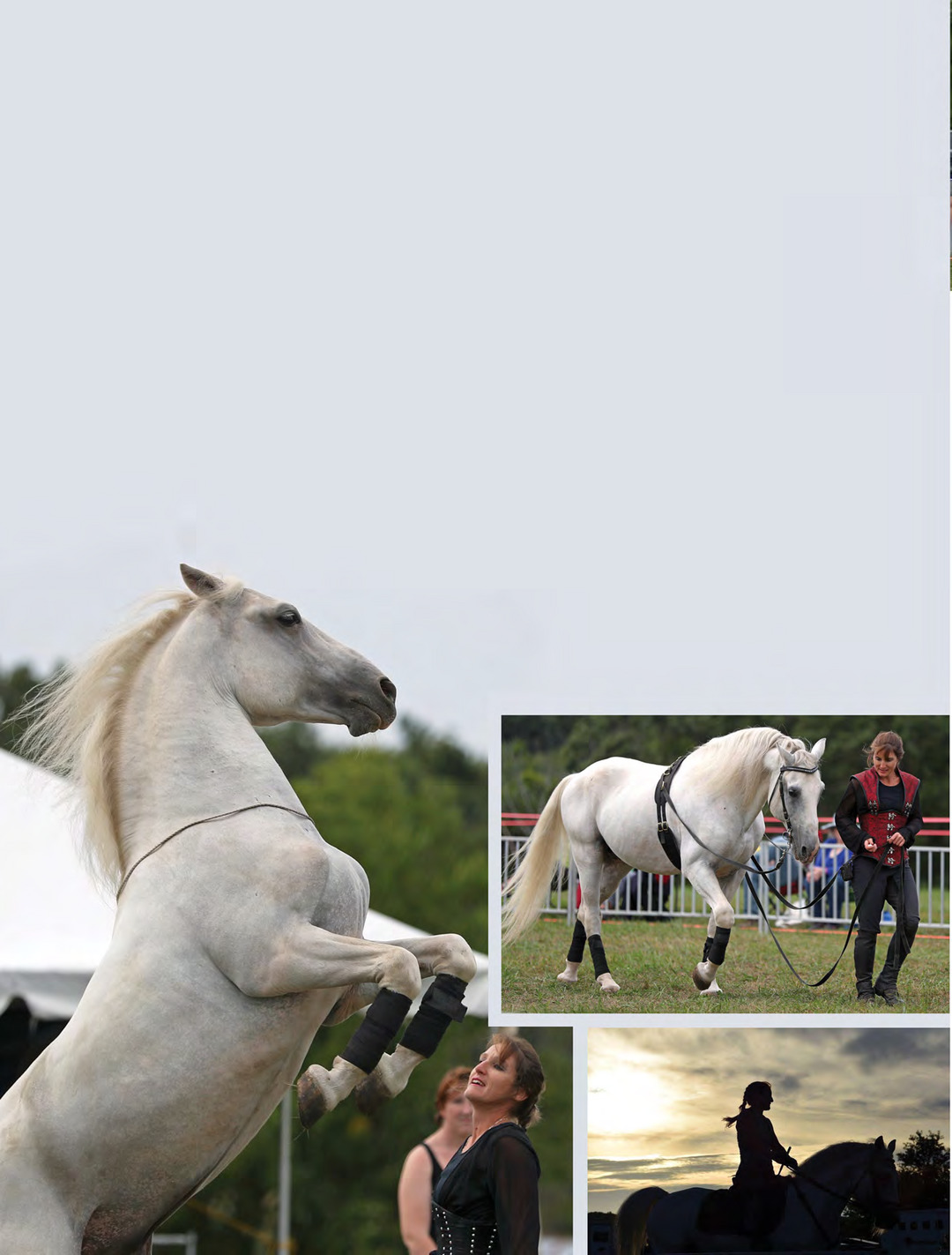 Page 20 of EQUINE ROYALTY IN ALL ITS GLORY