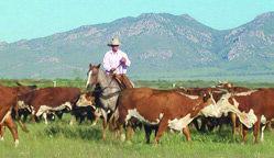Page 13 of Arizona Cowboy Wins 2018 Hillerman Award