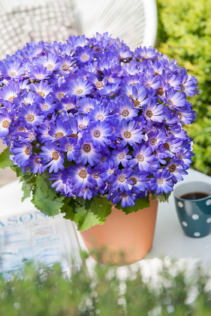 Page 20 of Senetti® Collection