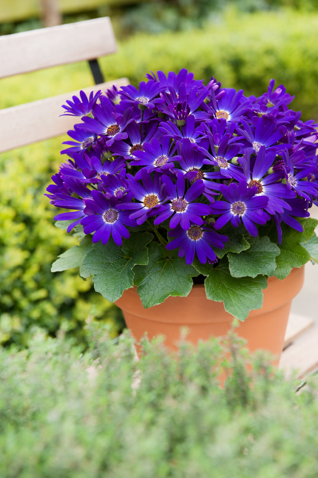 Page 6 of Advantages of Senetti®