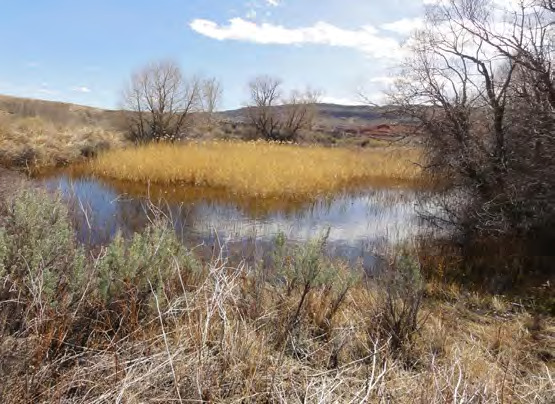 Page 28 of Desert Wetland Ecosystems: Springs, Seeps and Irrigation