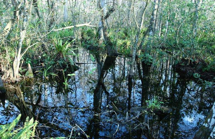 Page 36 of World Wetland Day and Ramsar Wetlands in the USA - Uncertainty for the Future