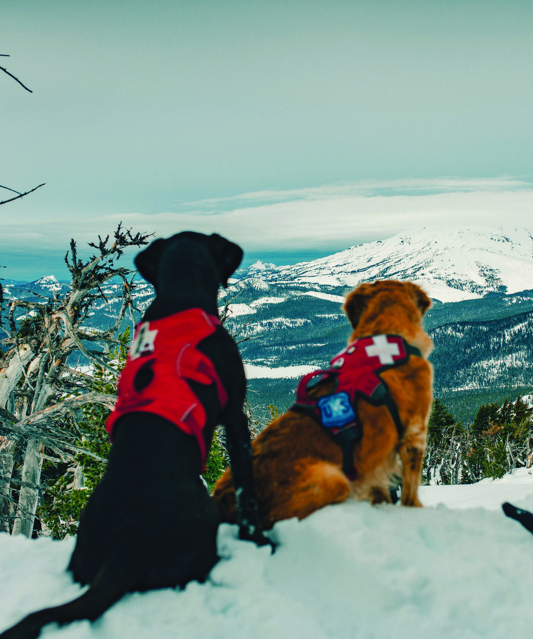 Page 68 of Mountain Rescue Dogs