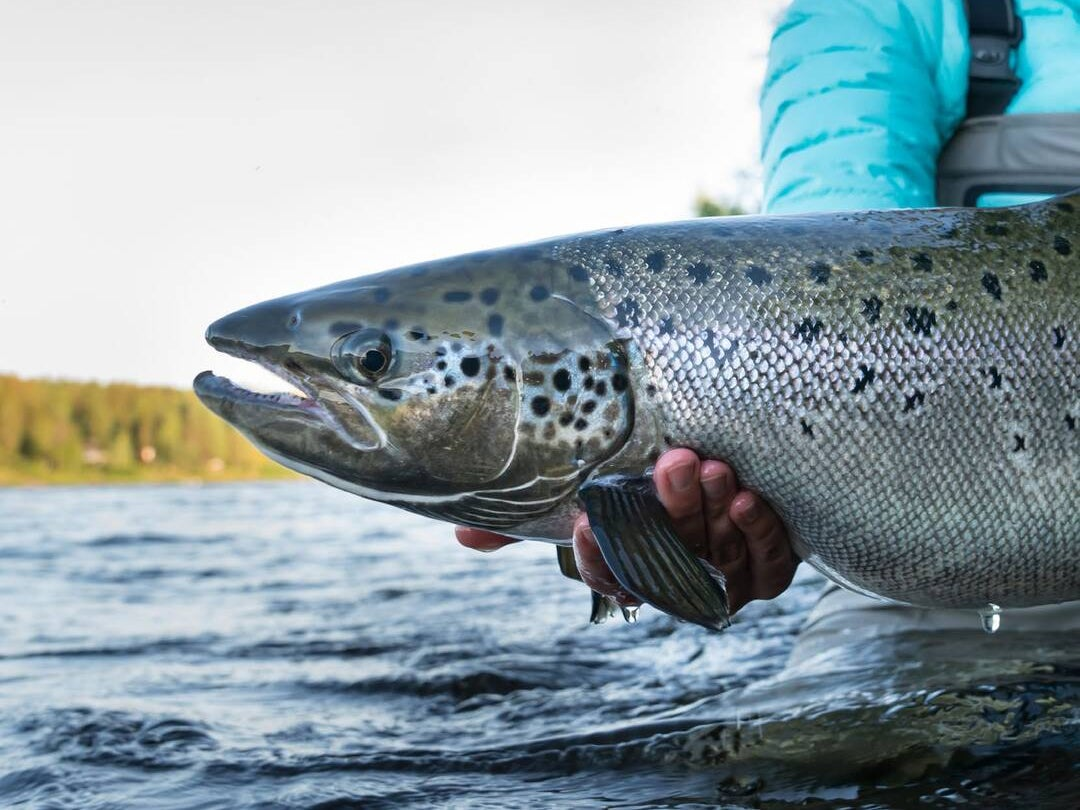 Page 118 of Finland: Salmon Fishing under the Midnight Sun
