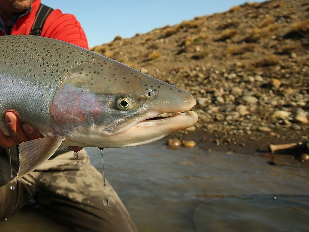 Page 210 of The Santa Cruz: The Last Untouched Steelhead Fishery!