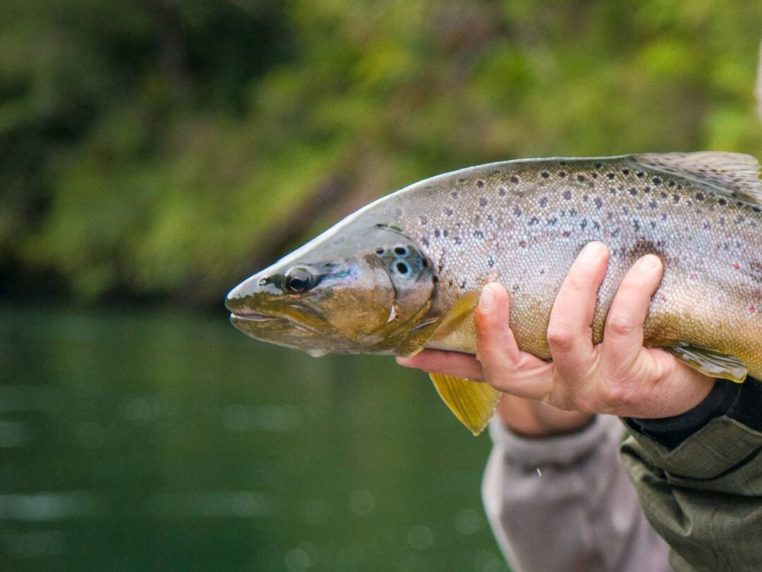 Page 220 of Chimalfe Patagonia Lodge: Fly Fishing in Glacial Realm of the Andes