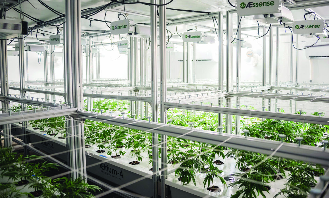 Page 6 of A growth industry: Automation in the burgeoning cannabis market