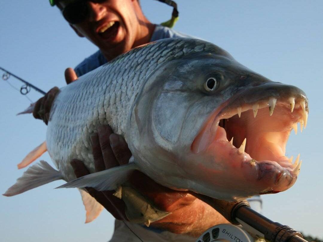 Page 192 of Targeting Tigerfish