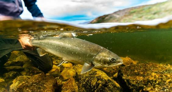 Page 152 of Greenland: Fly Fishing on Top of the World