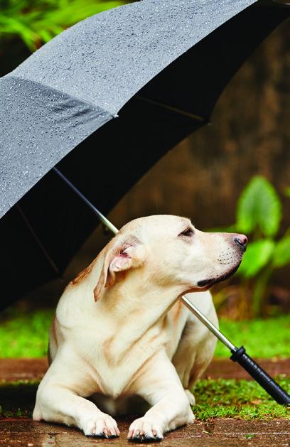 Read story: Disaster Preparedness