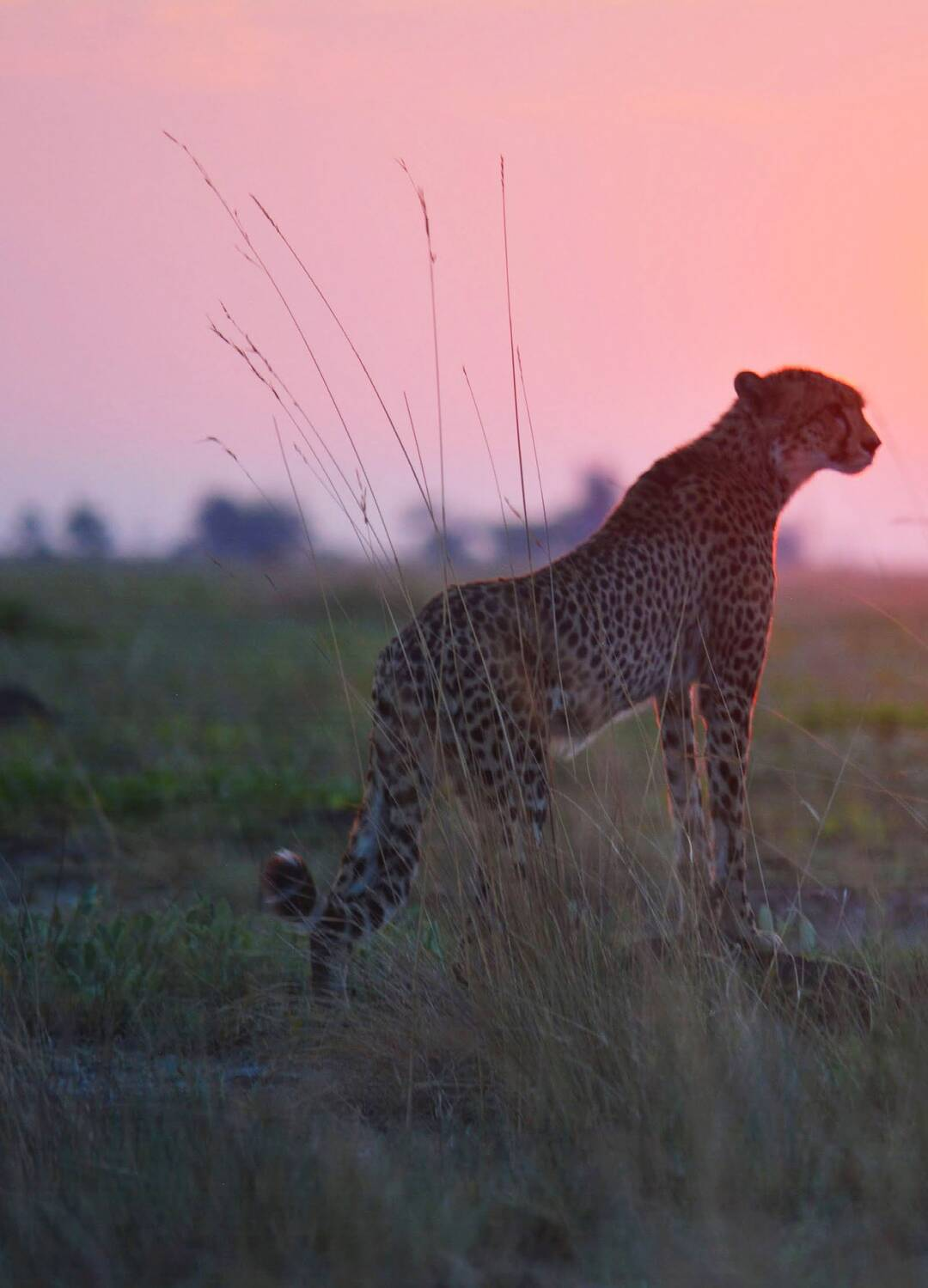 Page 38 of Back From the Brink: Liuwa Plain National Park