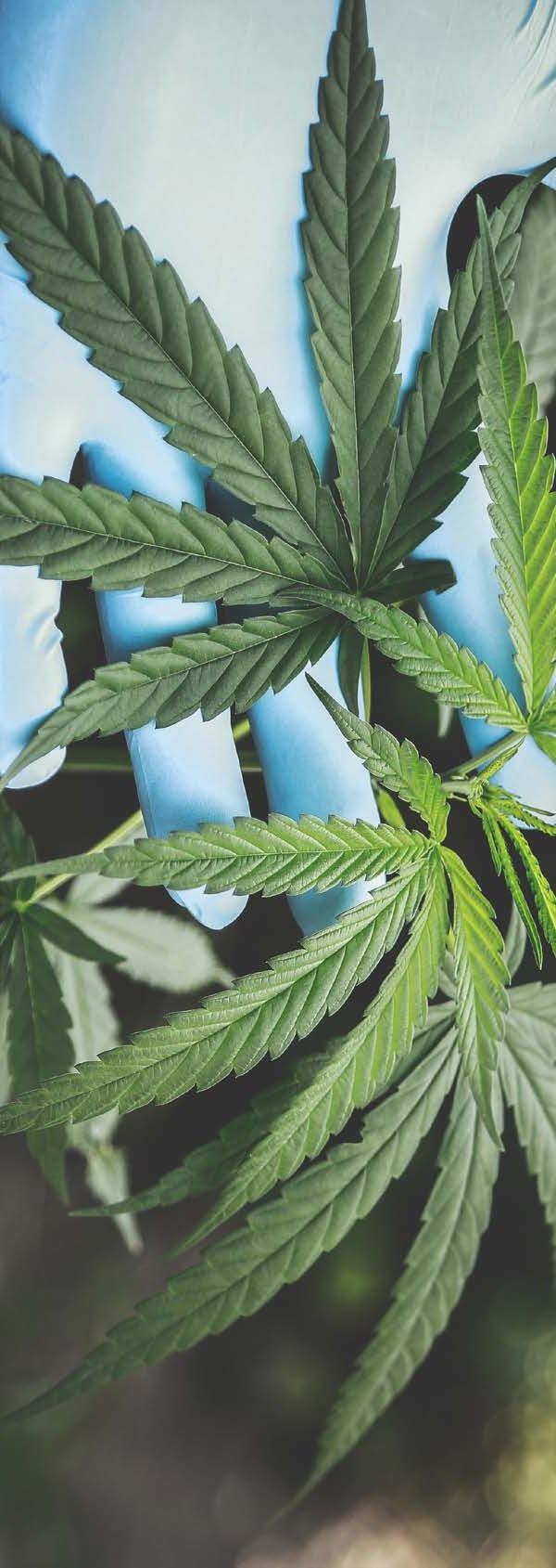 Page 10 of Cannabidiol: un compuesto de la marihuana que ayuda a superar su abstinencia