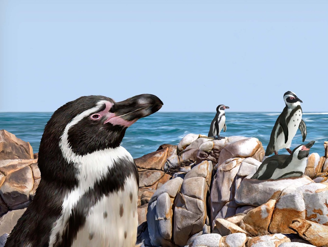 Page 1 of Humboldt Penguin Protected Areas Network