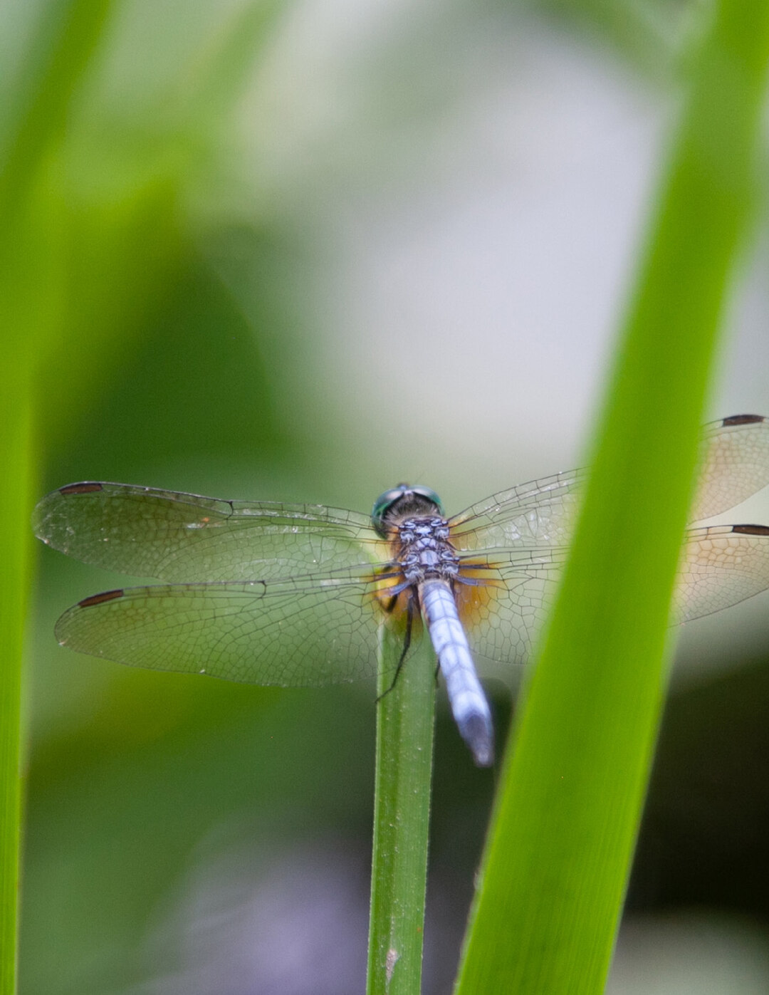 Page 6 of TELGE ROAD DETENTION BASIN BECOMES Dragonfly Habitat