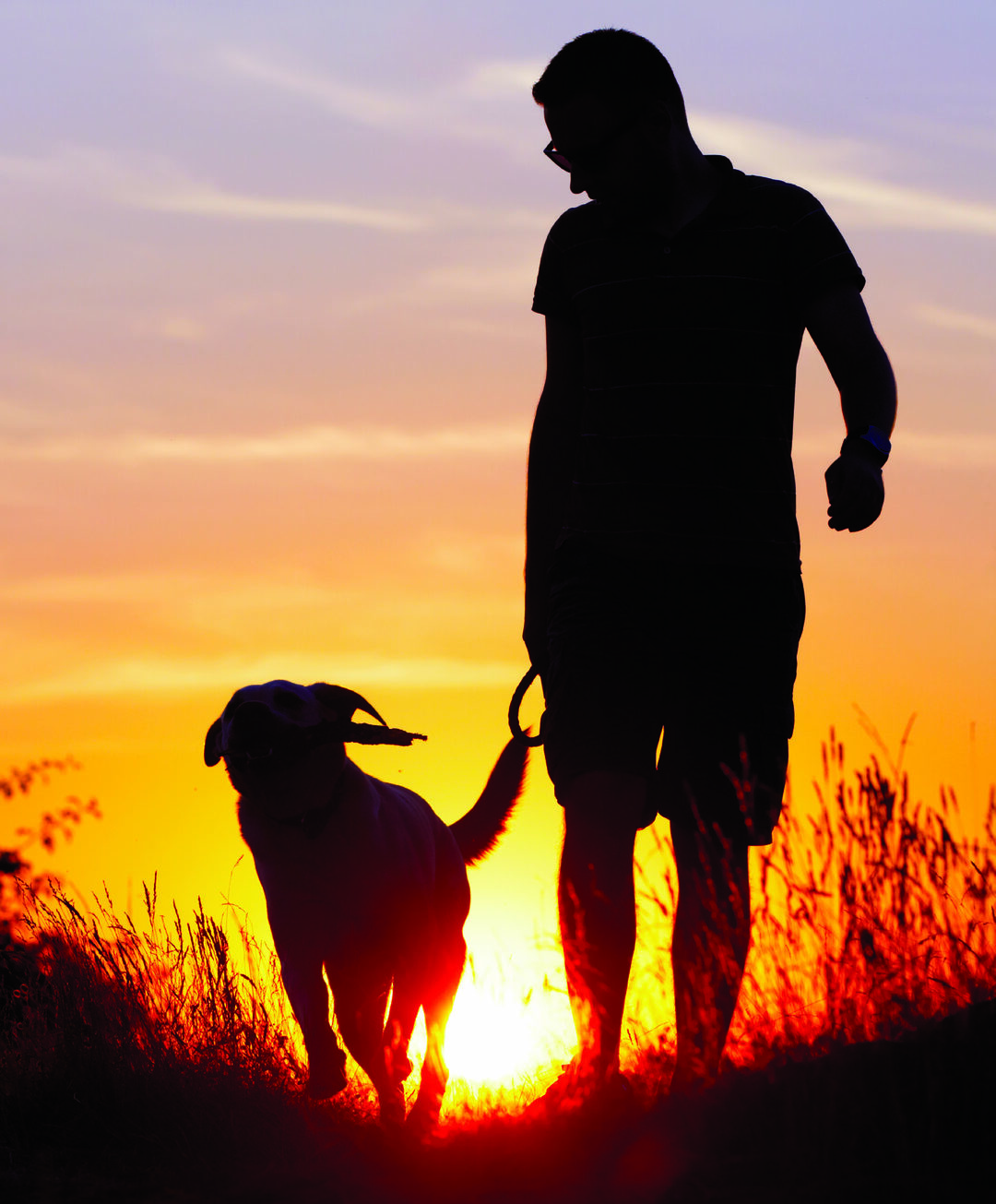 Page 48 of 8 Dog Breeds That are Perfect for the Outdoor Lifestyle