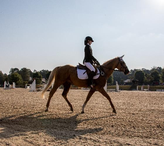 Page 24 of The Southeast Schooling Show Championships
