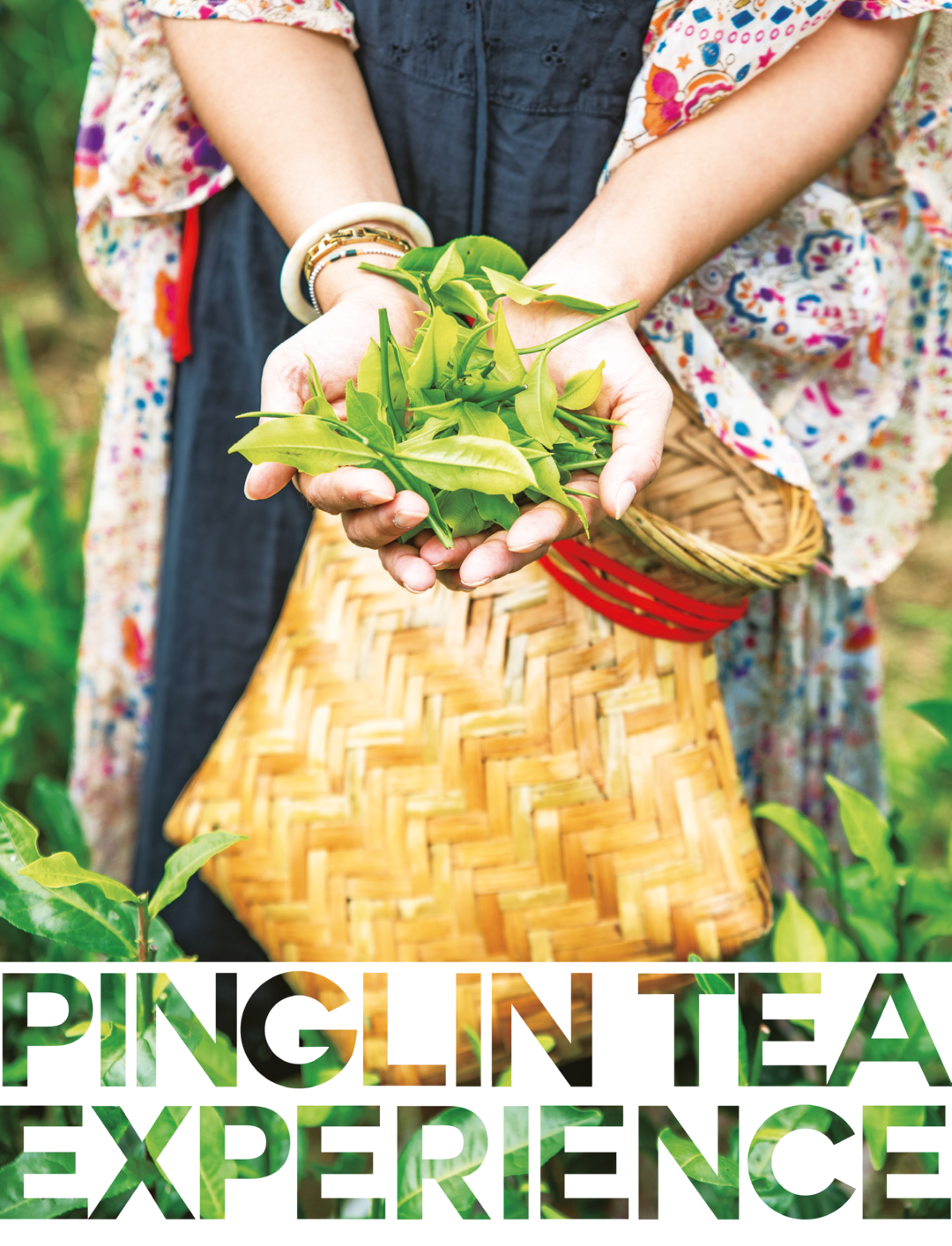 Page 26 of Pinglin Tea Experience