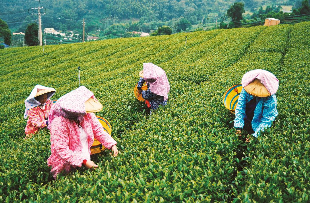 Page 9 of Tea Travel Taiwan Alishan: A New Cultural Tourism Experience