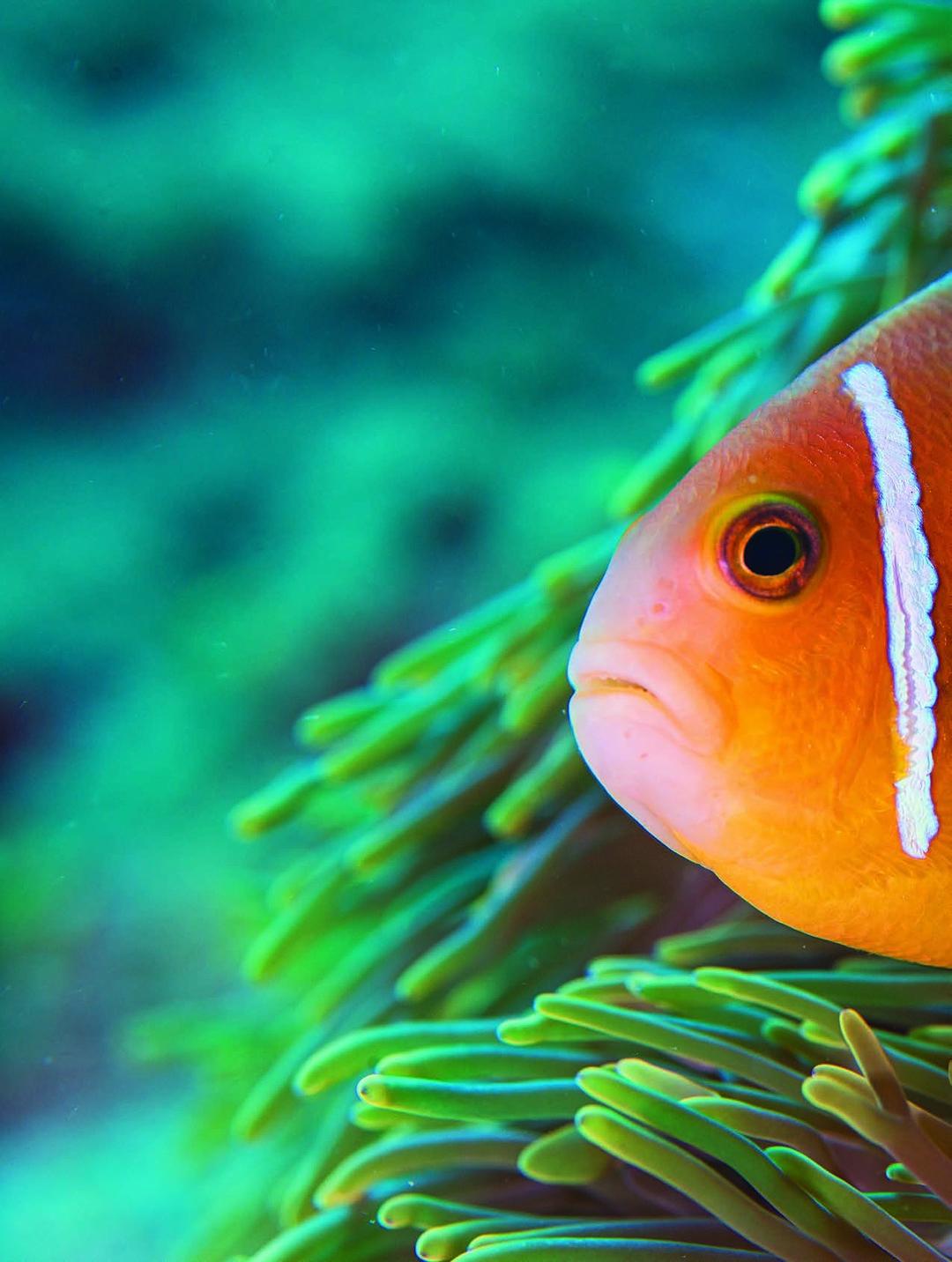 Read story: Indian Ocean