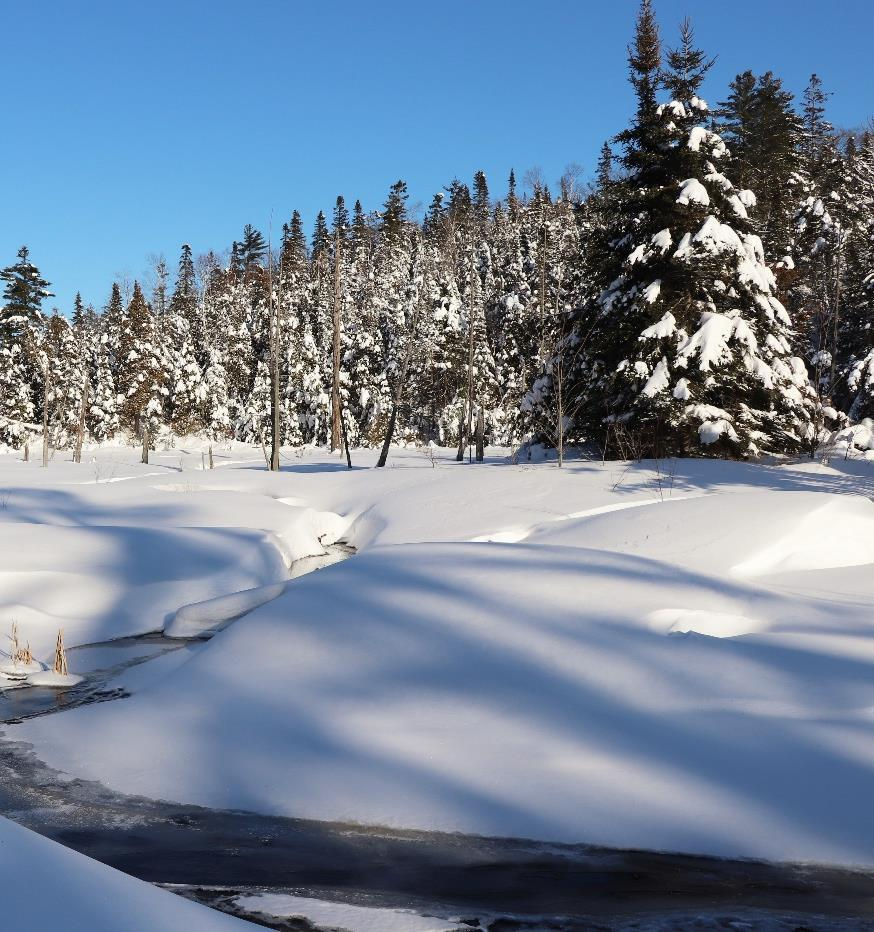 Page 8 of TROUT LAKE SNOWSHOE