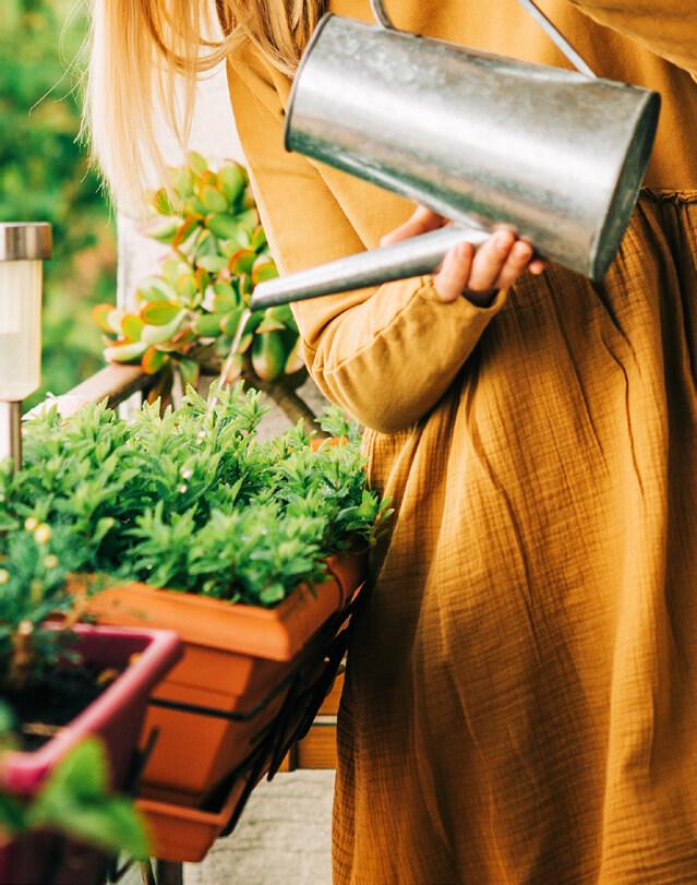 Read story: Happy Houseplants