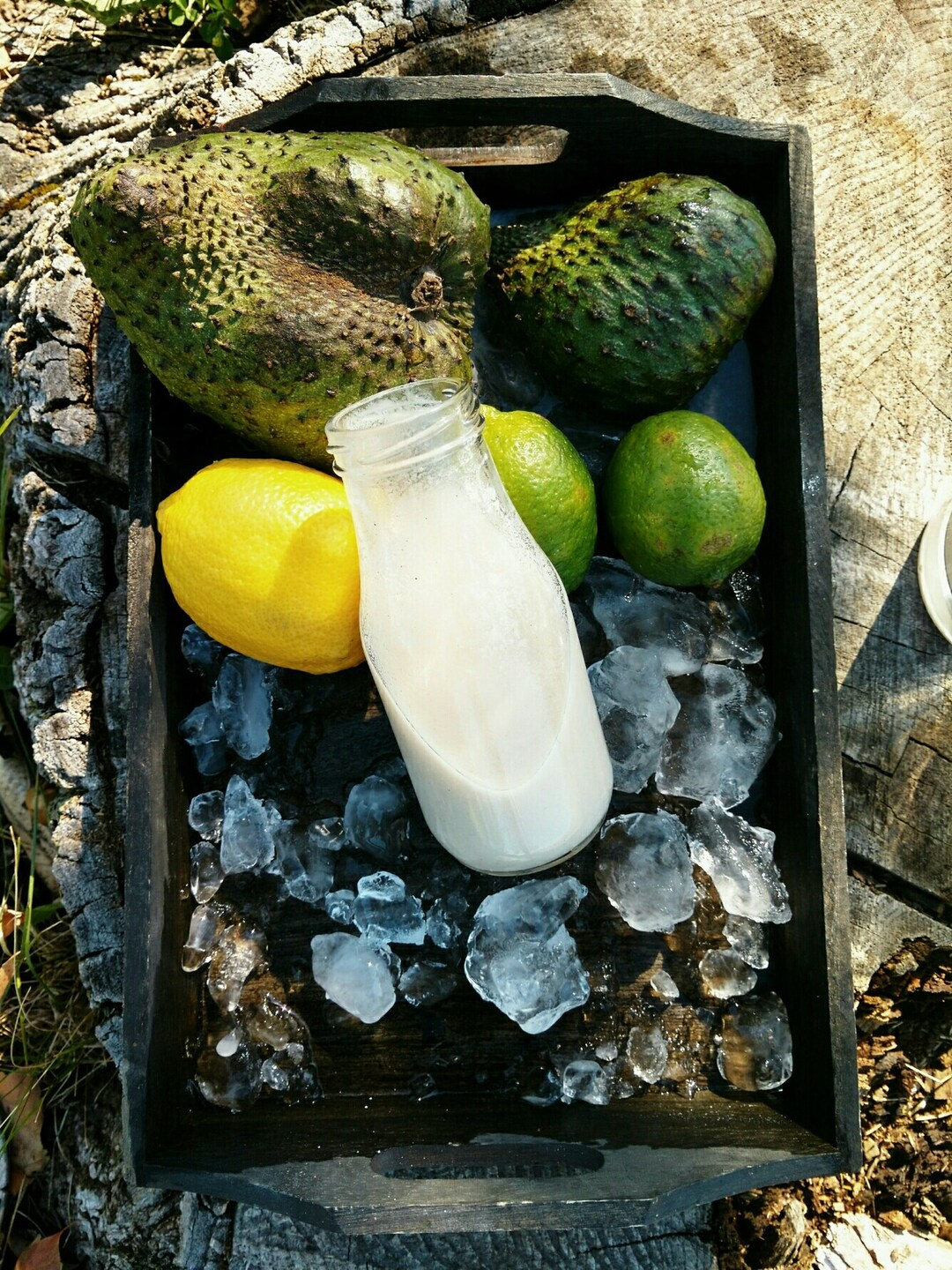 Page 5 of Fruits of Jamaica   Soursop
