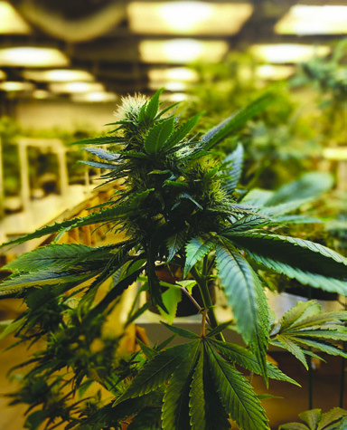 Page 12 of County study compares emissions between marijuana grow sites