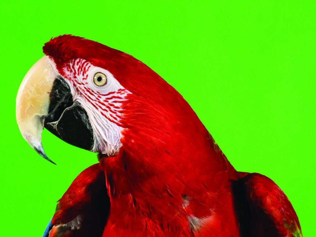 Page 1 of Your Pet Magazine featuring Birds Of A Feather Parrot Rescue of New Mexico