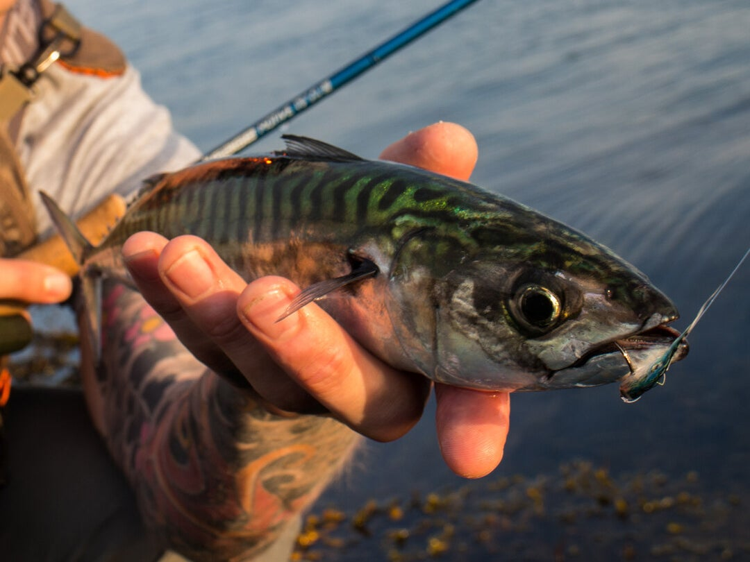 Page 222 of Tactics and Flies: Fly Fishing for Mackerel