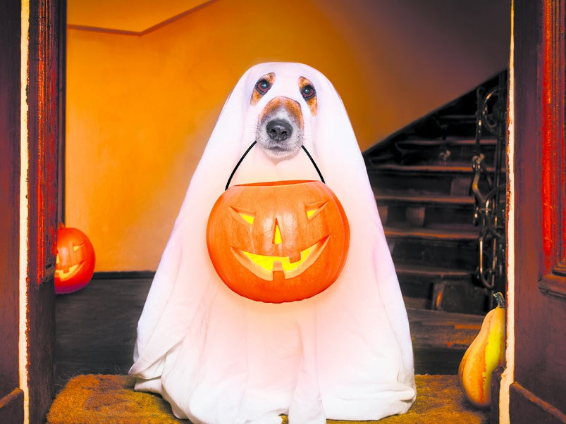 Page 23 of Halloween for dogs: pet safety tips