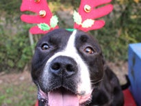 Page 36 of Happy Holidays for Homeless Pets