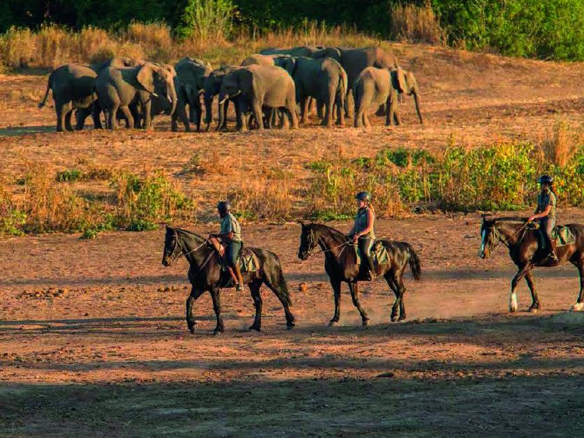 Page 10 of HORIZON HORSEBACK: RIDING BETWEEN SOUTH AFRICA AND BOTSWNA