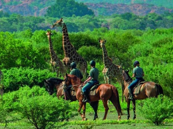 Page 8 of HORIZON HORSEBACK: SUDAFRICA E BOTSWANA...I SAFARI A CAVALLO