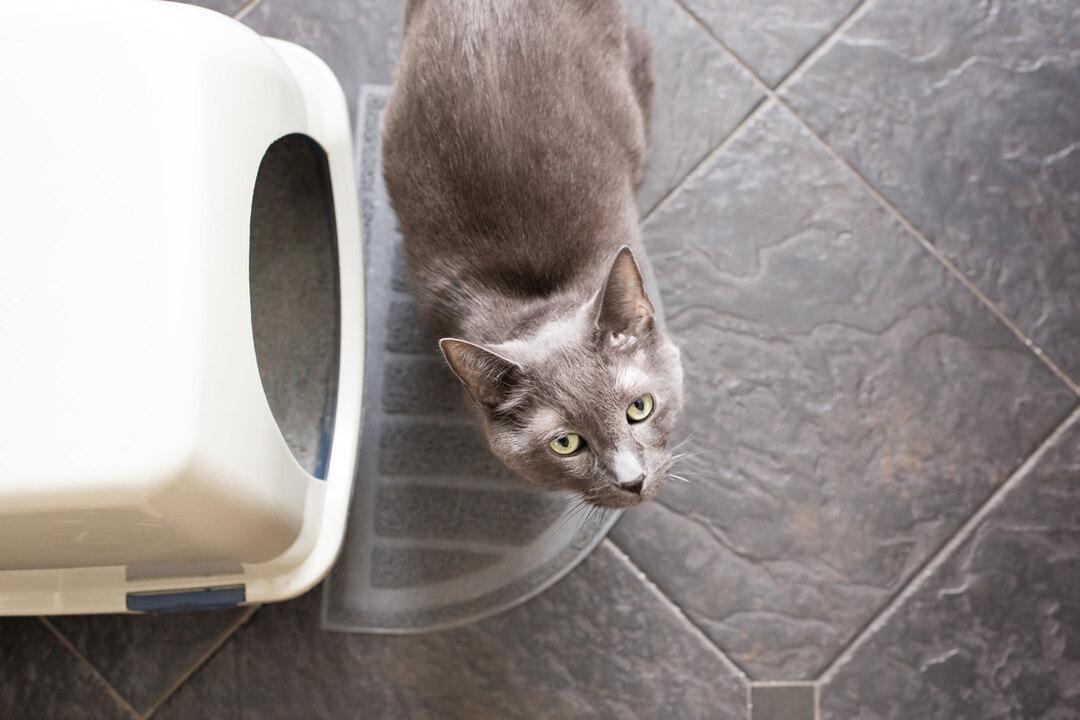 Page 8 of Feline Housesoiling