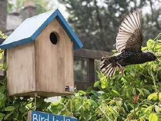 Page 15 of Outdoor Bird-Related Garden Fun